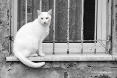 2-gatto-bianco-1