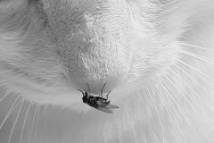 3.-gatto-mosca-
